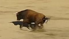 命知らずの男の生きざまをとくと見よ!華麗過ぎる闘牛は観ている方も命がけ!?(動画)