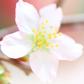 まもなくお花見の季節到来!便利なアプリを使ってより一層楽しもう!