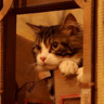 ヘッドライン : 監督も俳優も猫!?DMMが動画コンテンツ特集「HOLLY BOTE WOOD」を公開中!